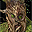 Ent.png