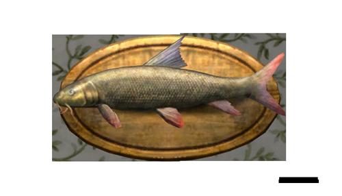 item barbarous barbel trophy   lotro wiki