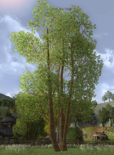 elm tree. Item:Four Elm Trees