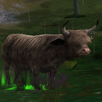 Image of Domesticated Dun Ox