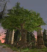 Image of Walking-tree