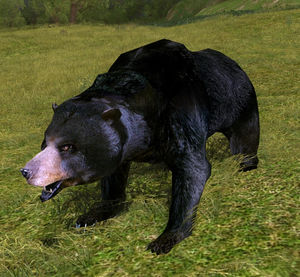 Black Bear appearance.jpg