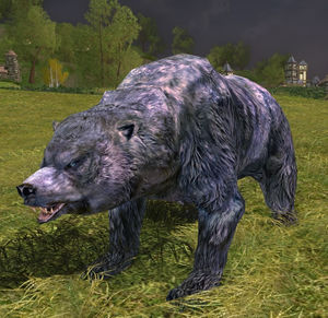 Weathered-bear appearance.jpg