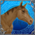 Riding Trait (Store)-icon.png
