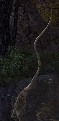 Summoned Root (Level 37).jpg