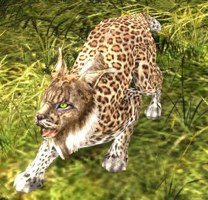 Lynx-speech (Spotted Lynx) - Lotro-