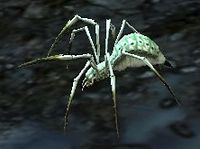 Spiderling (Dagorlad).jpg