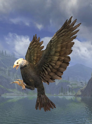 Snowcrest-eagle appearance.jpg