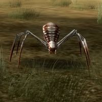 Creatures-Spiders And Insects.jpg