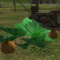Festival Pumpkin Patch.jpg