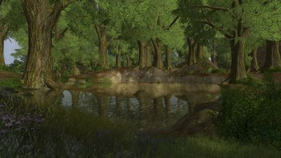Quaint fishing pond in the deep woods