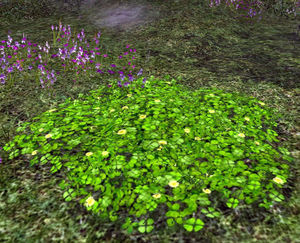 Clover Patch.jpg
