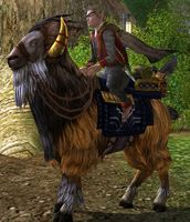 Image of Prized Tame Redhorn-goat