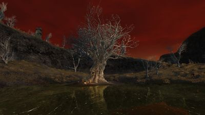 An ancient tree atop a pond isle