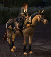 Image of Farmers Faire Pony