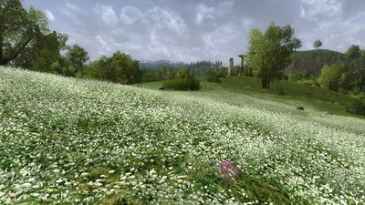 White flower meadow in the Brandy Hills