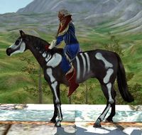 Image of Skeleton Painted Horse